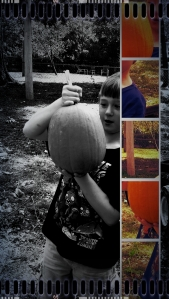 We grew pumpkins